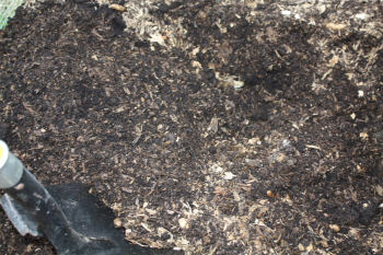 Rich, Black Compost